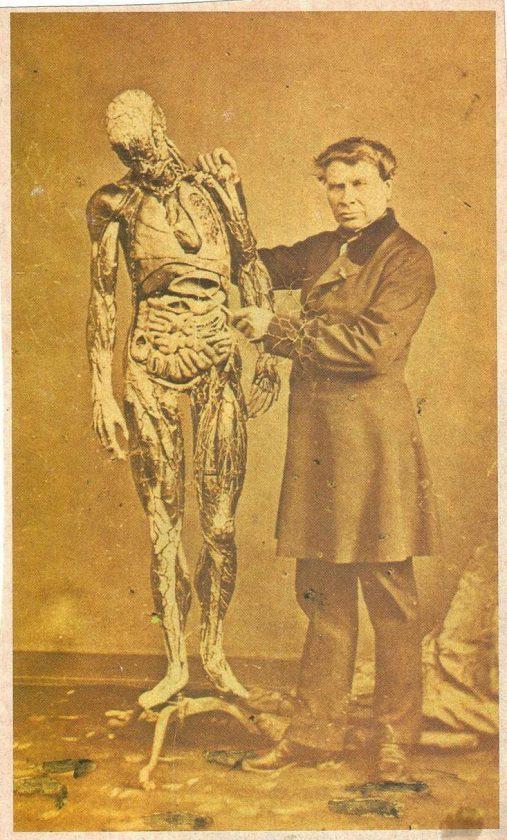 modele-anatomique-docteur-Auzoux-1820-32