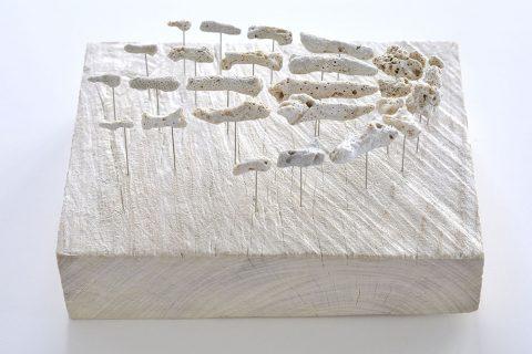 corail-squelette-01