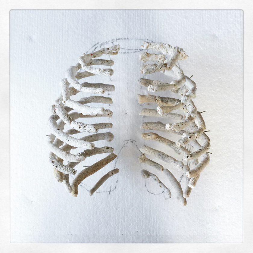 corail-squelette-03