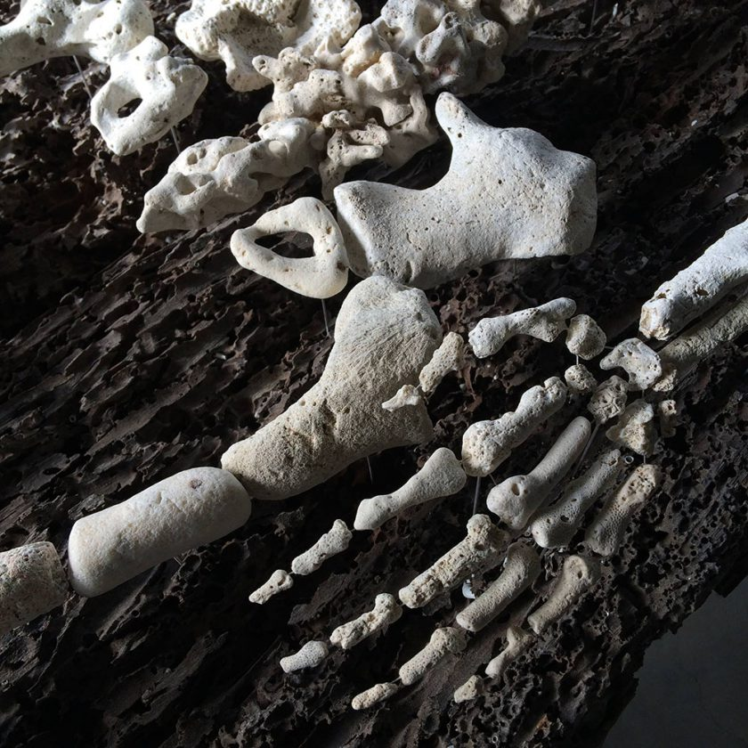 corail-squelette-04