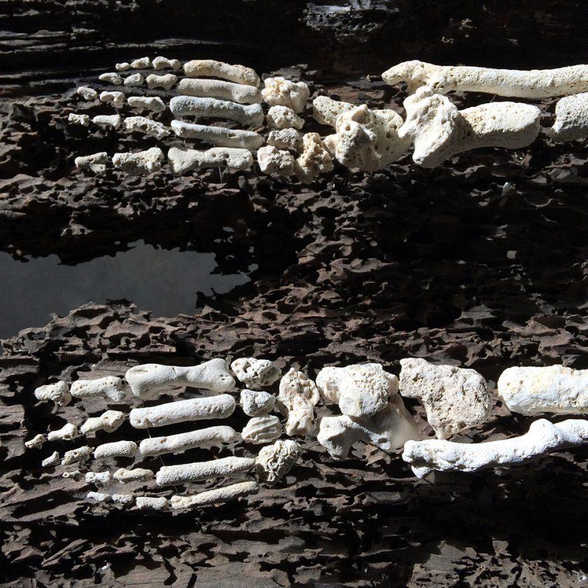 corail-squelette-05