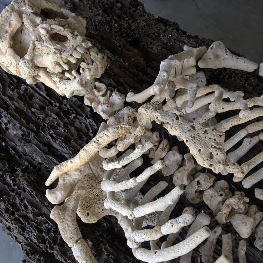 corail-squelette-06