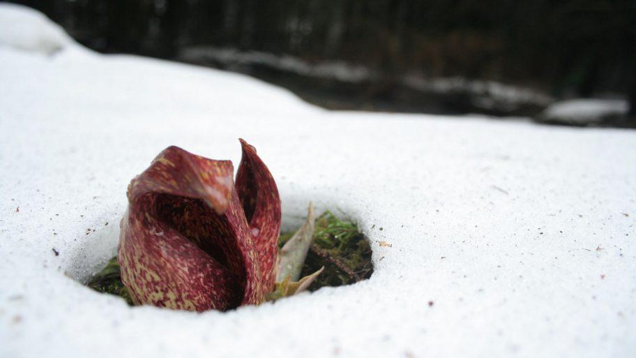 plante-chaleur-chaud