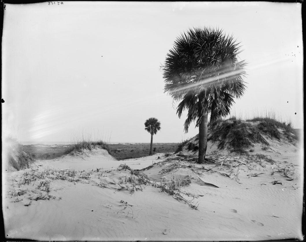 12. Ou le palmier (on est pas là pour juger)