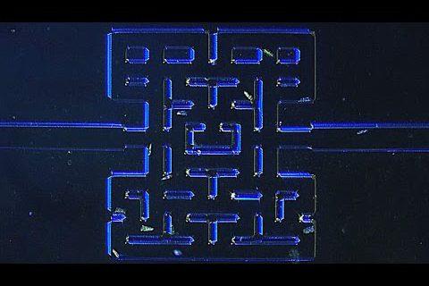 Des micro-organismes qui jouent à un Pac-Man de moins d'1mm