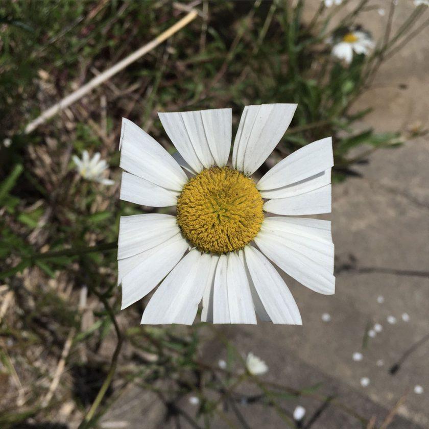 fleur-carre-02