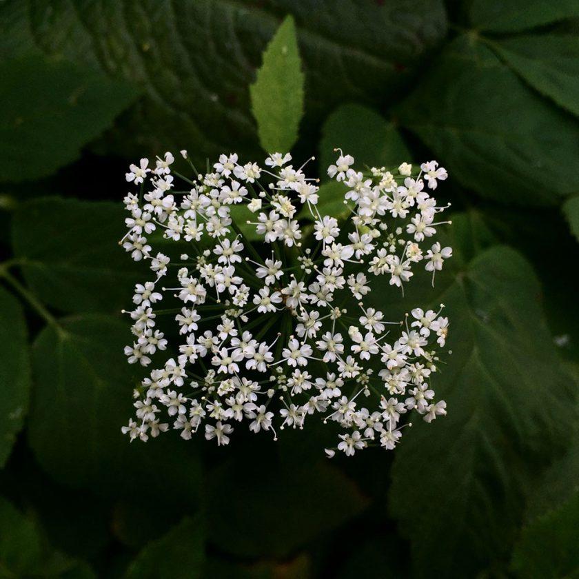 fleur-carre-03