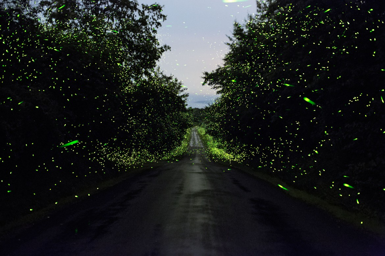 luciole-mauney-06