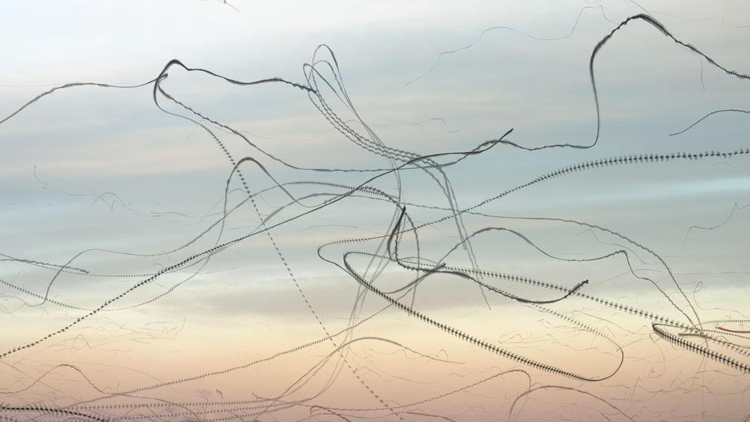 xavi-bou-oiseau-trace-02