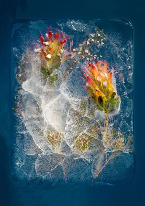 compositions-florales-glace-01
