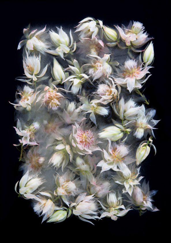 compositions-florales-glace-02