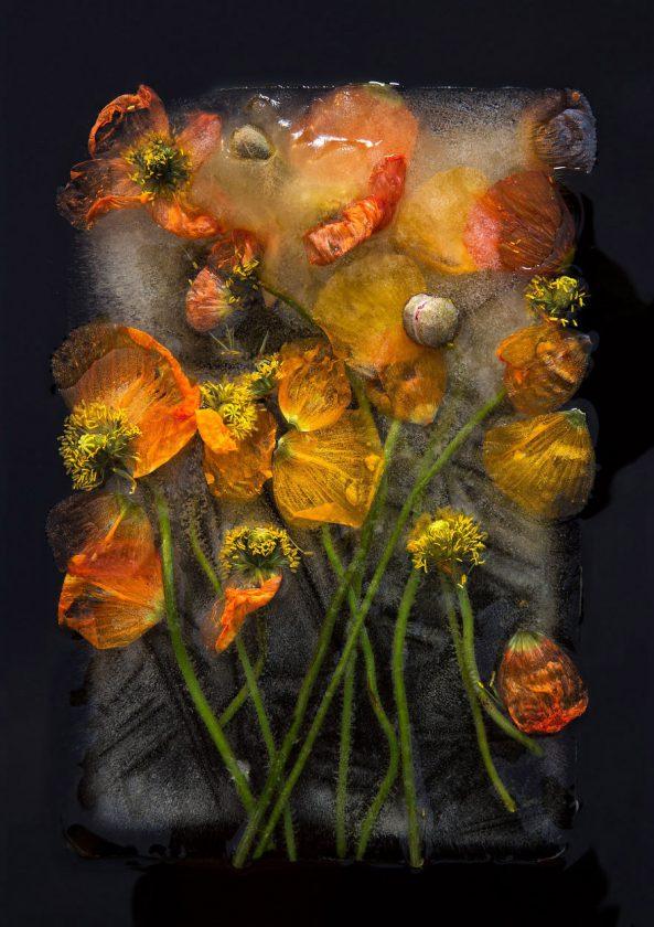 compositions-florales-glace-03