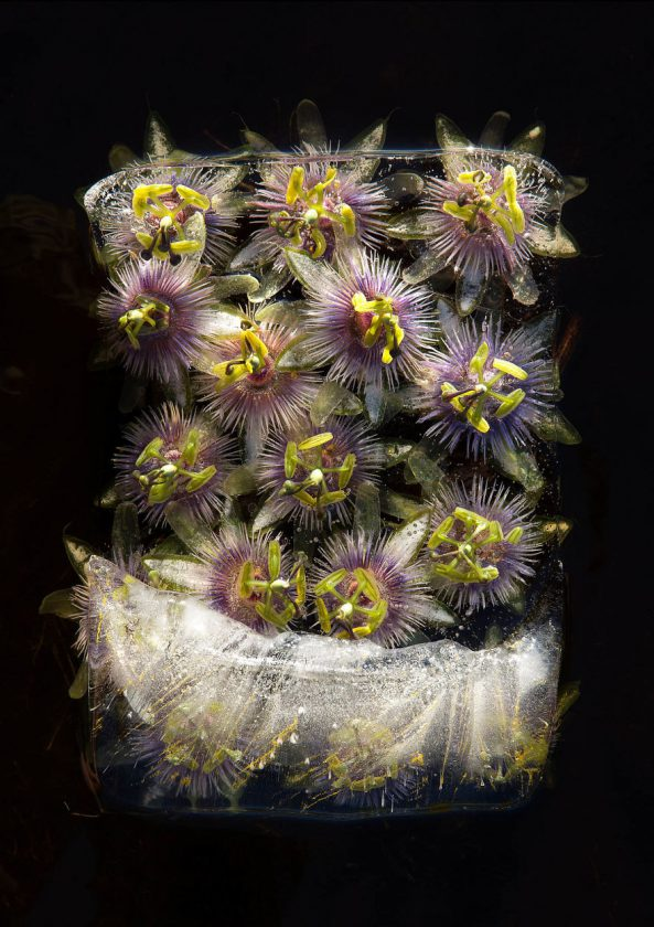 compositions-florales-glace-04