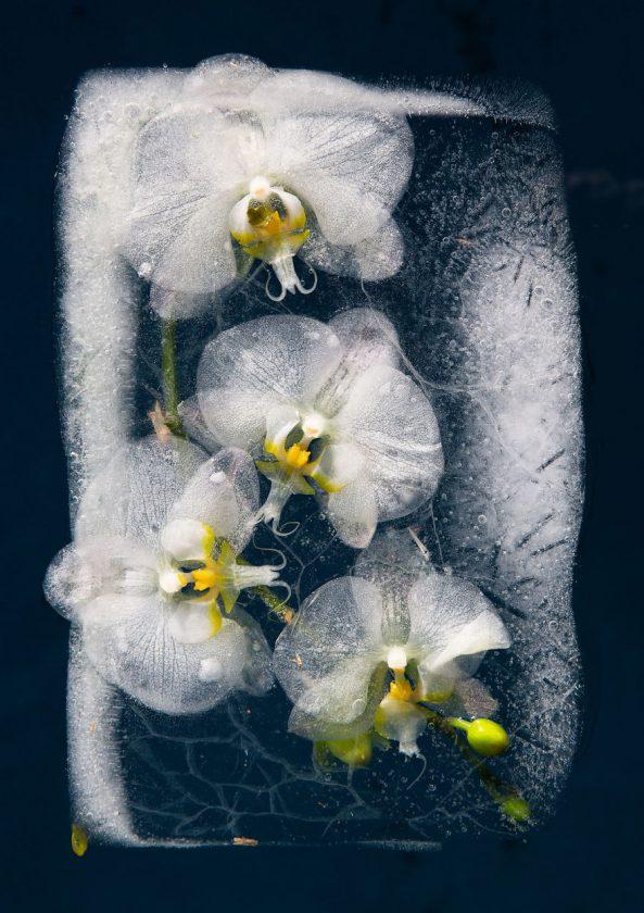 compositions-florales-glace-06