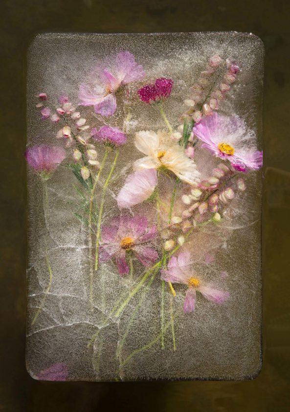 compositions-florales-glace-09