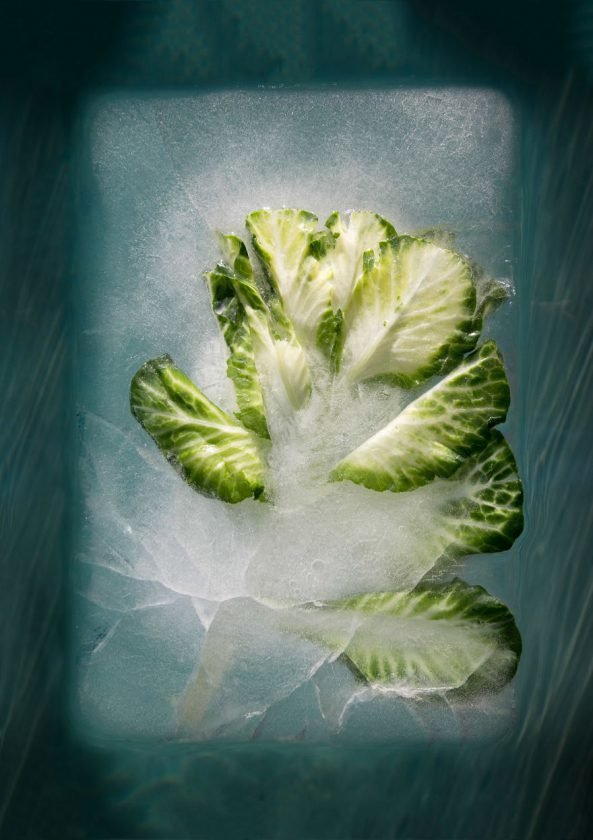 compositions-florales-glace-10