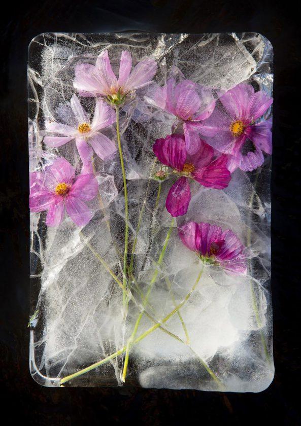 compositions-florales-glace-11