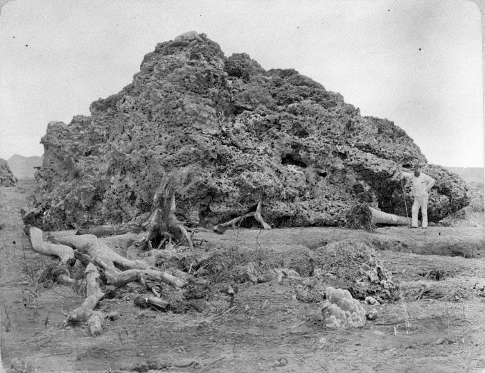 krakatoa-corail