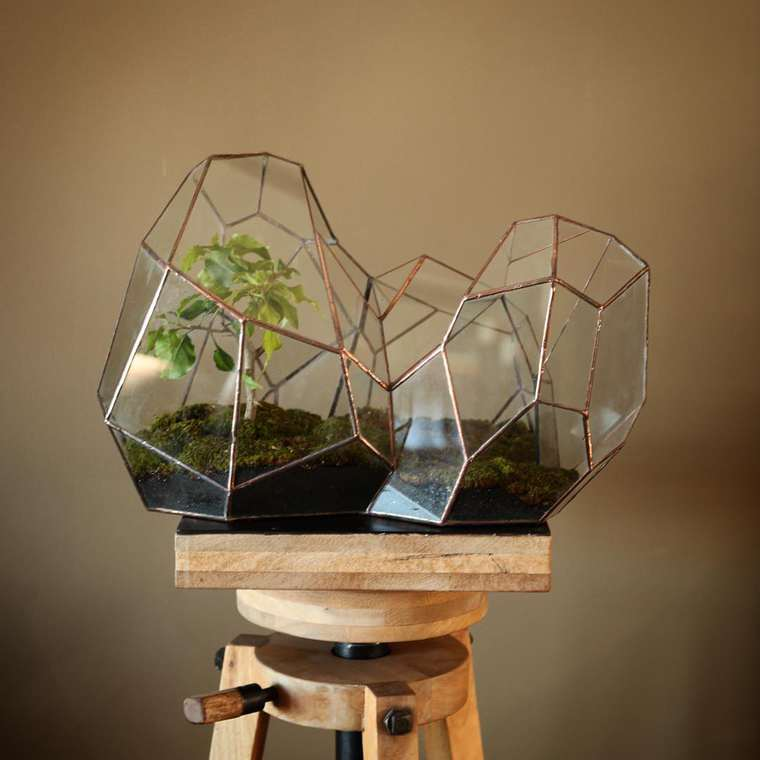 terrarium-plante-01