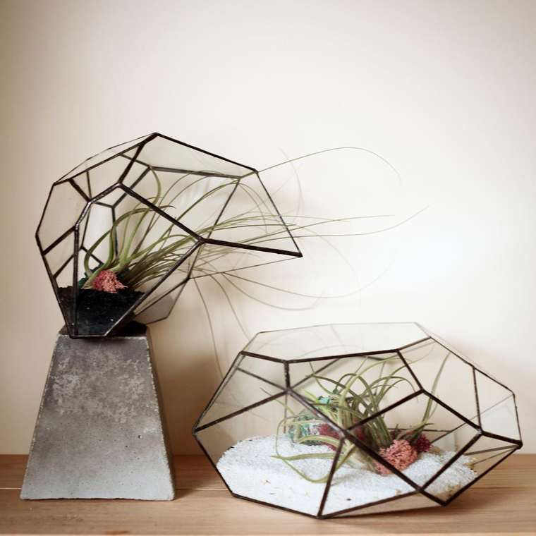 terrarium-plante-03