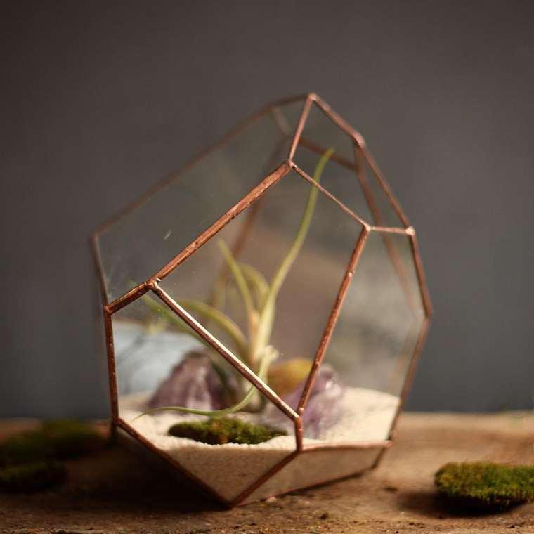 terrarium-plante-05