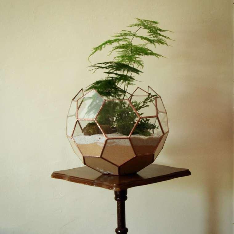 terrarium-plante-06