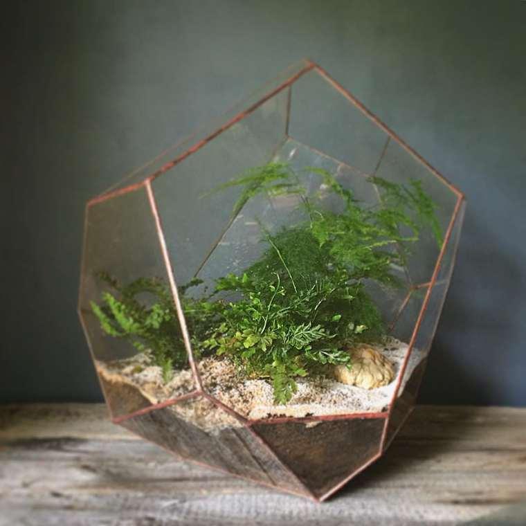 terrarium-plante-08