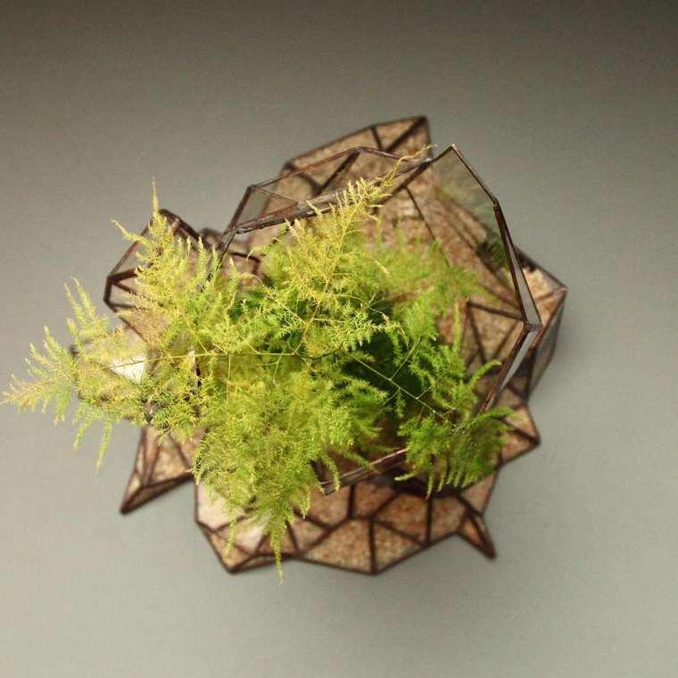terrarium-plante-10