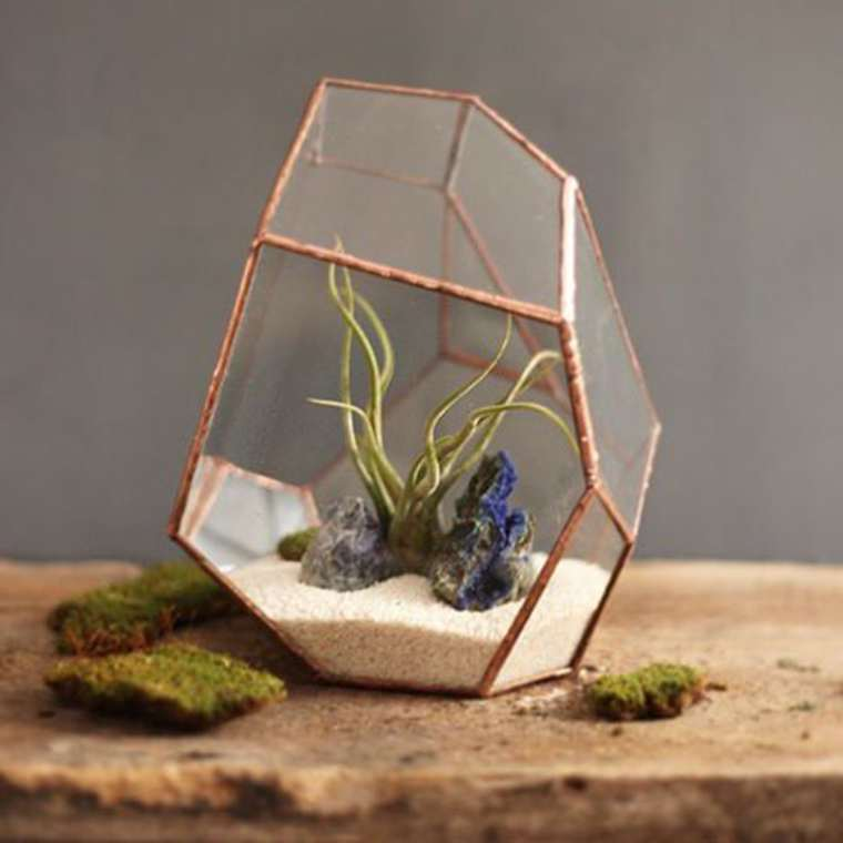 terrarium-plante-12