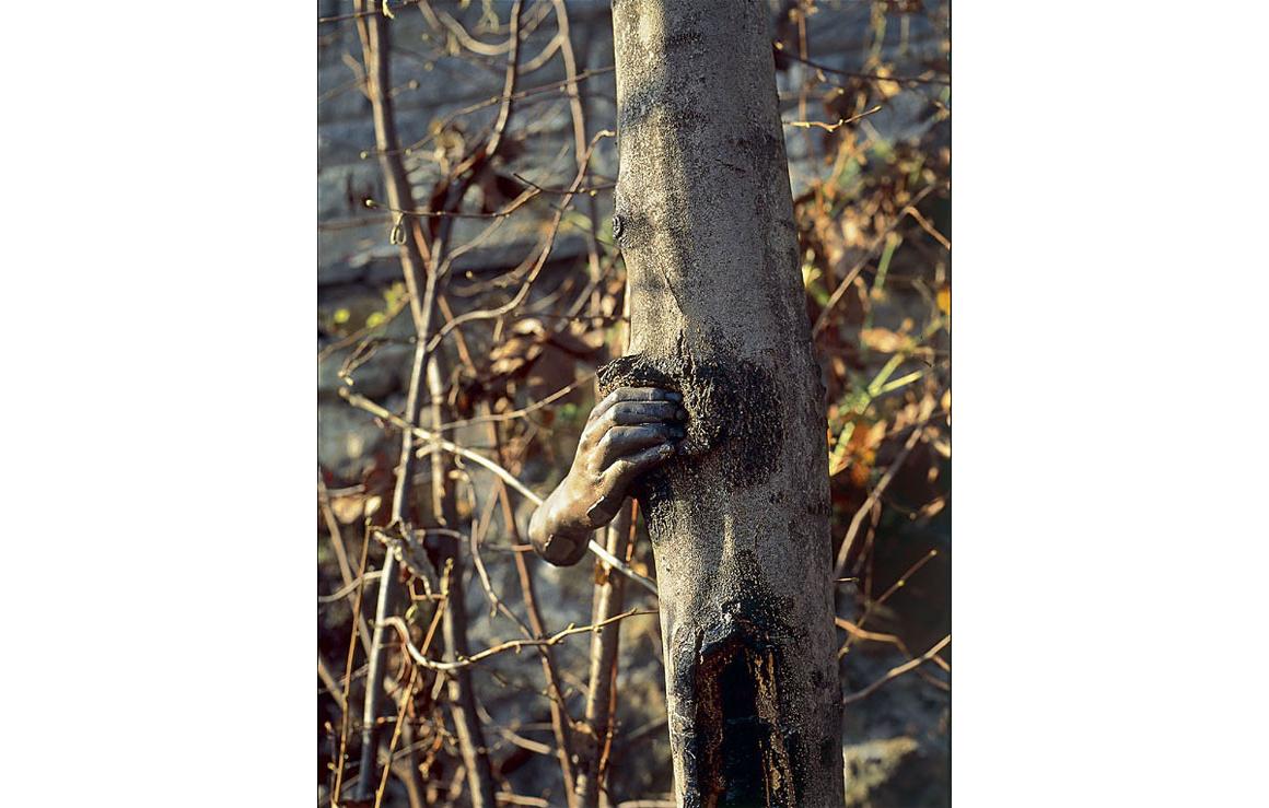 giuseppe-penone-main-arbre-02