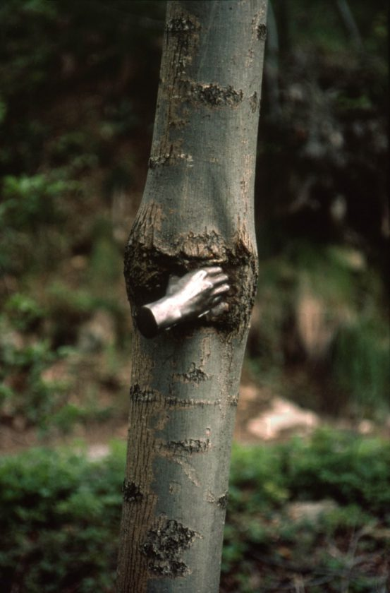 giuseppe-penone-main-arbre-03
