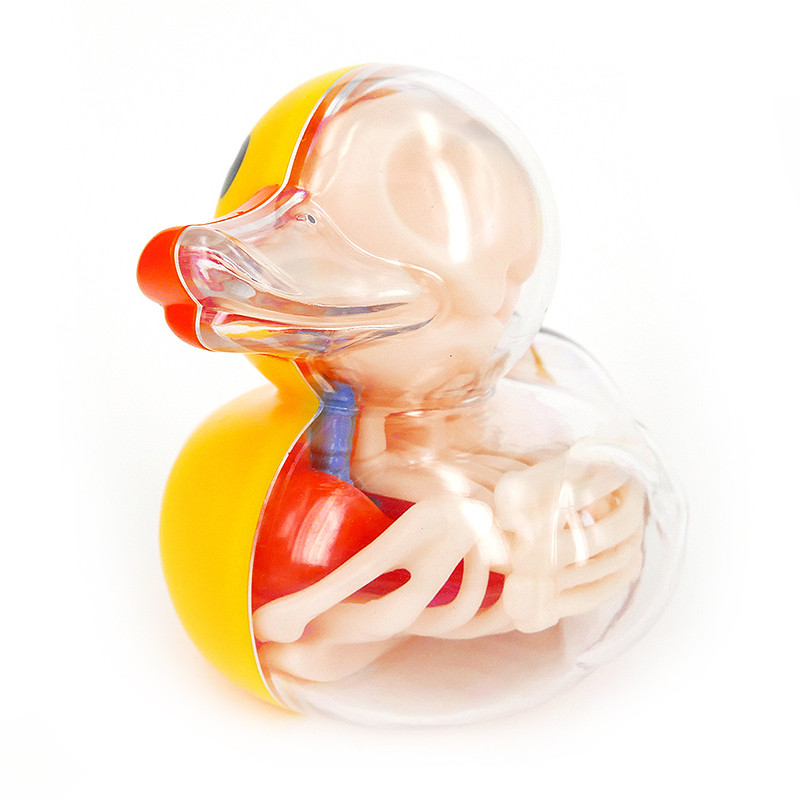jason-freeny-anatomie-jouet-11