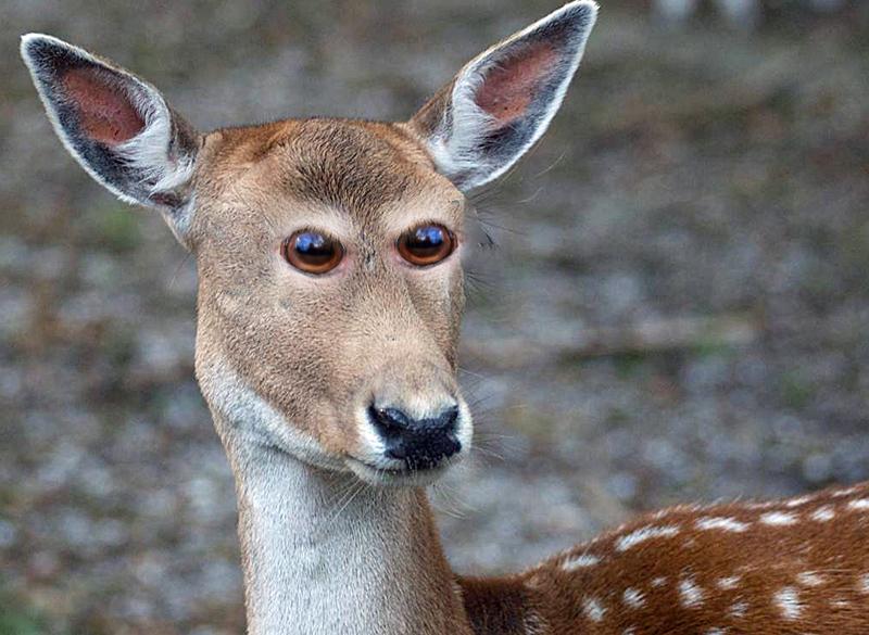 animal-yeux-devant-04