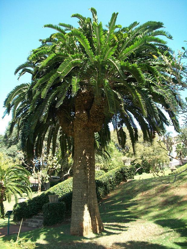 arbre-seul-05