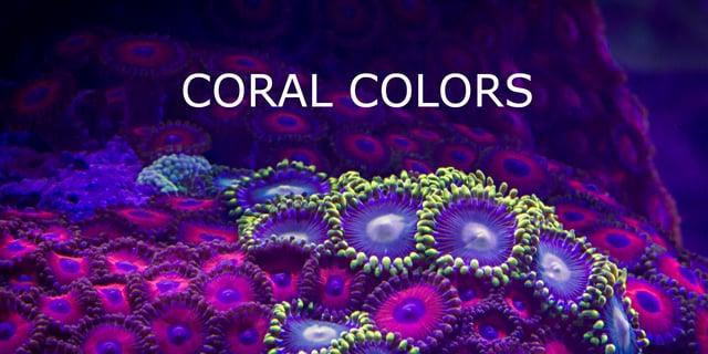 C'est vraiment beau les mouvements hypnotisants et les couleurs vives du corail