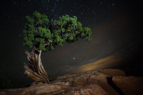 beth-moon-vieu-arbre-etoile-01