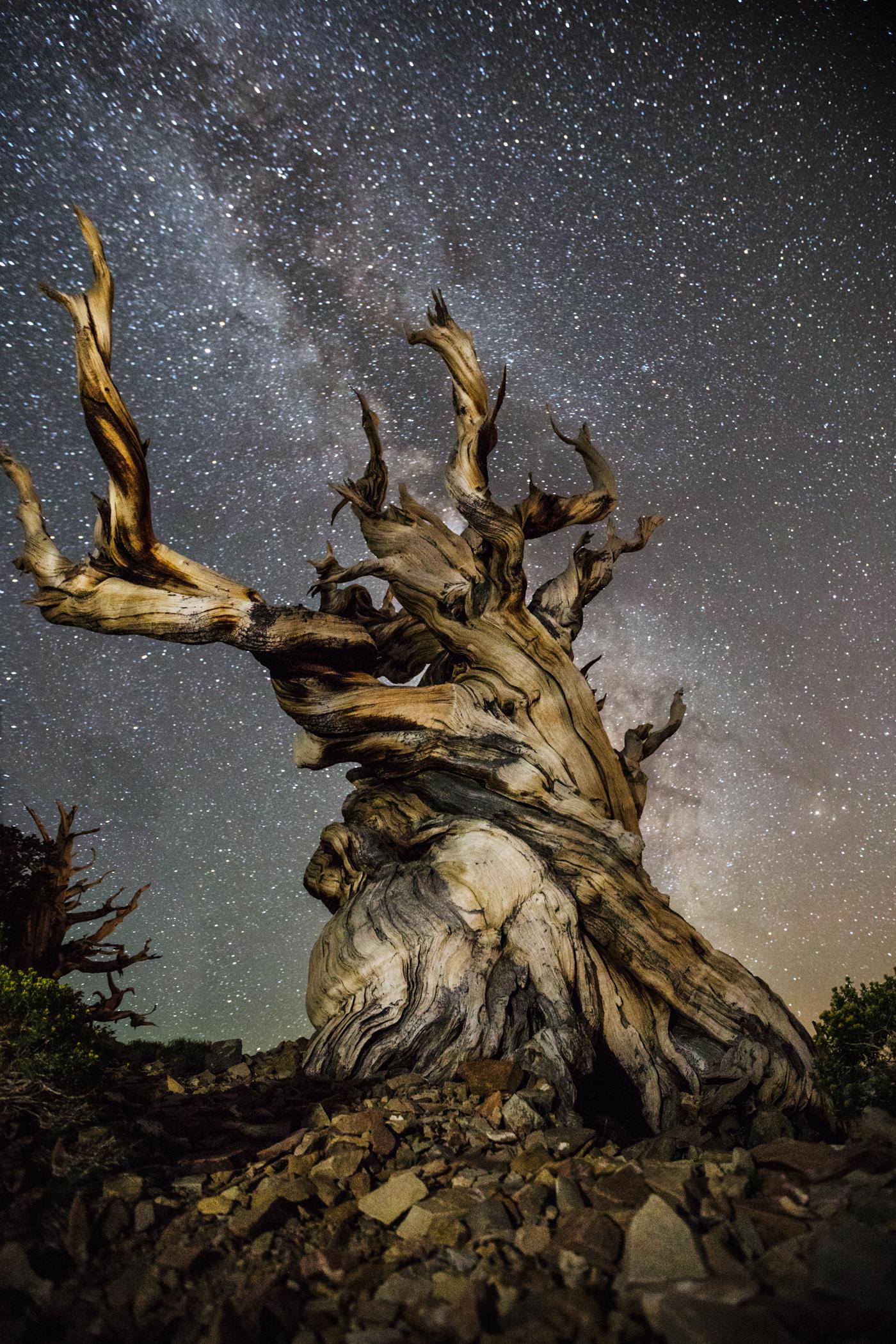 beth-moon-vieu-arbre-etoile-02