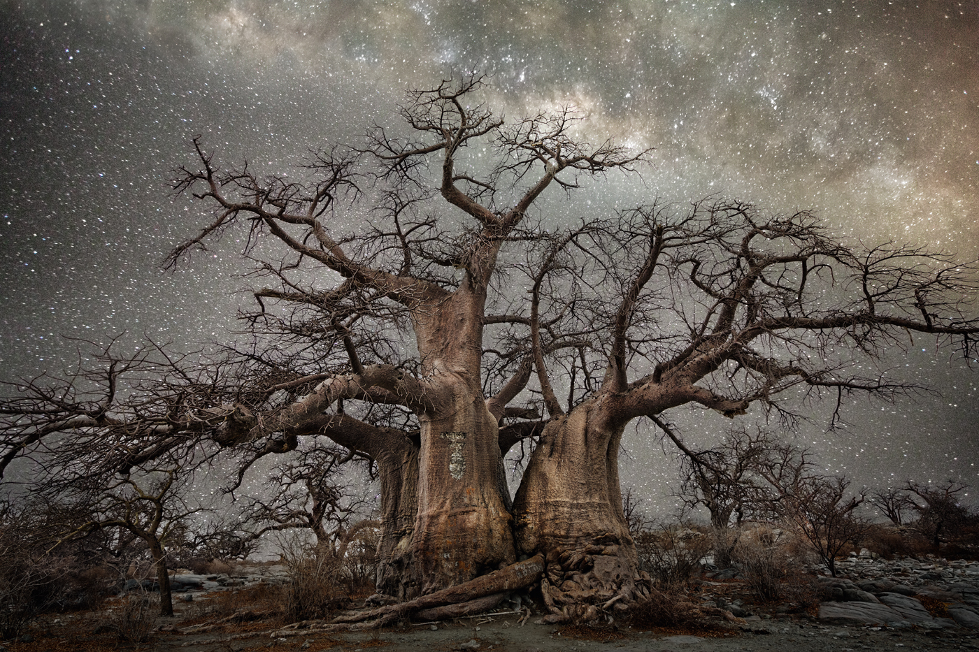 beth-moon-vieu-arbre-etoile-05