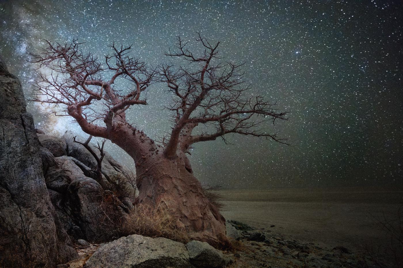 beth-moon-vieu-arbre-etoile-06