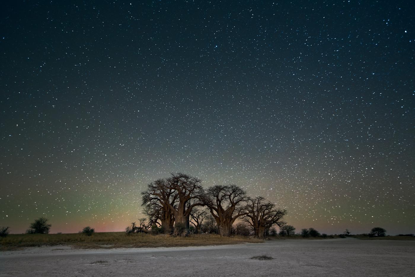 beth-moon-vieu-arbre-etoile-07