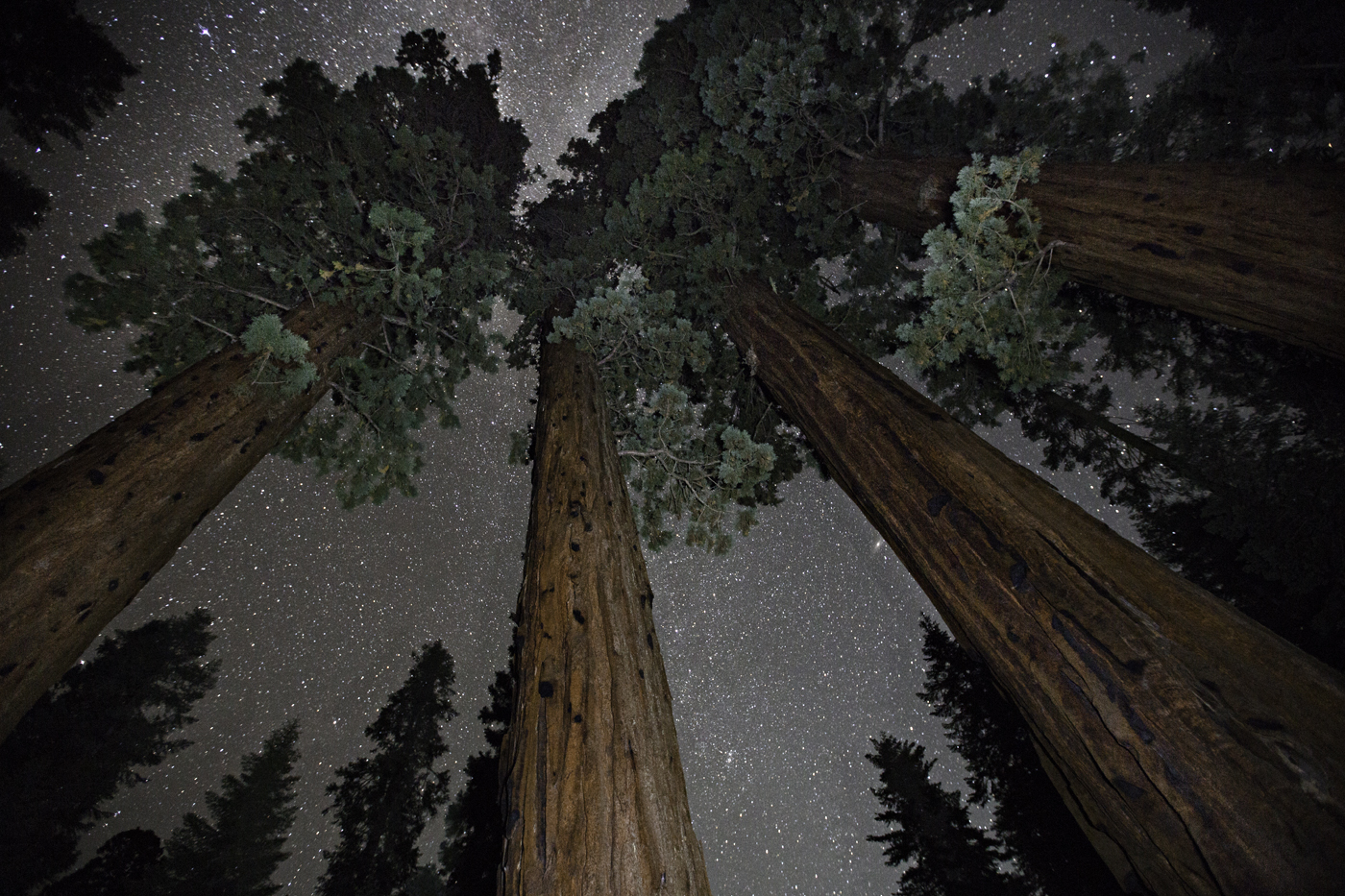 beth-moon-vieu-arbre-etoile-09