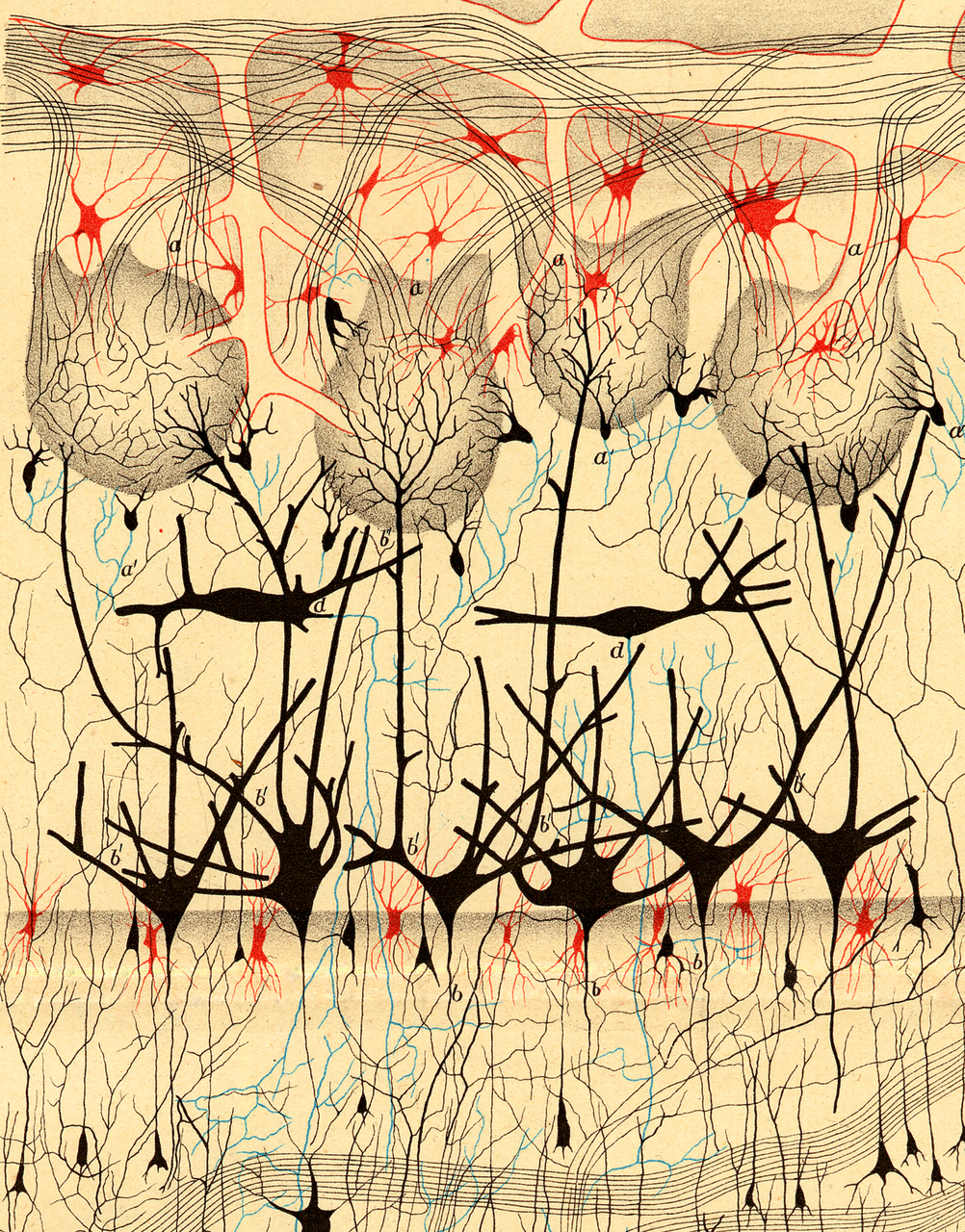 illustration-medicale-biologie-03