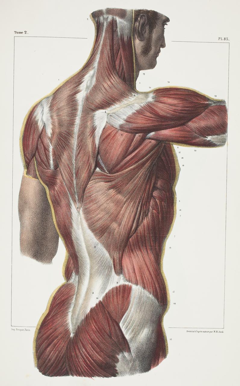 illustration-medicale-biologie-07