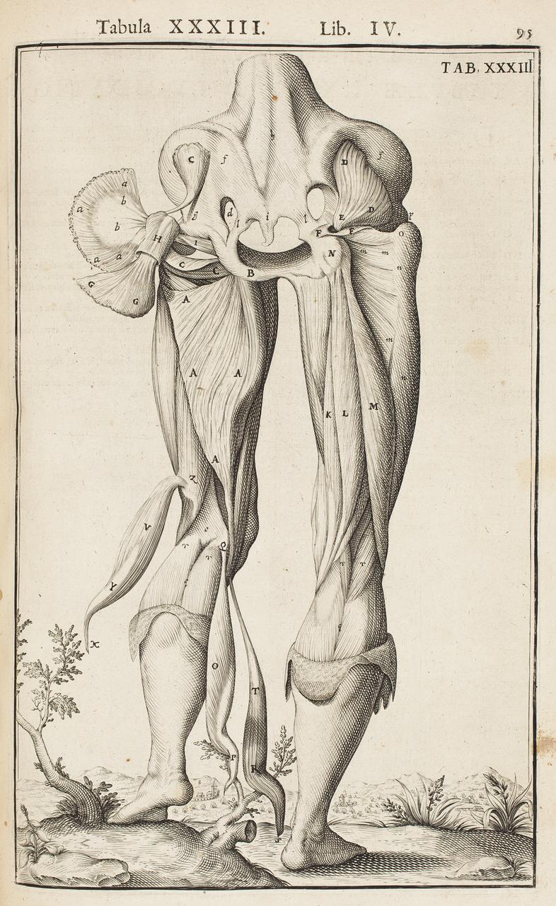 illustration-medicale-biologie-29