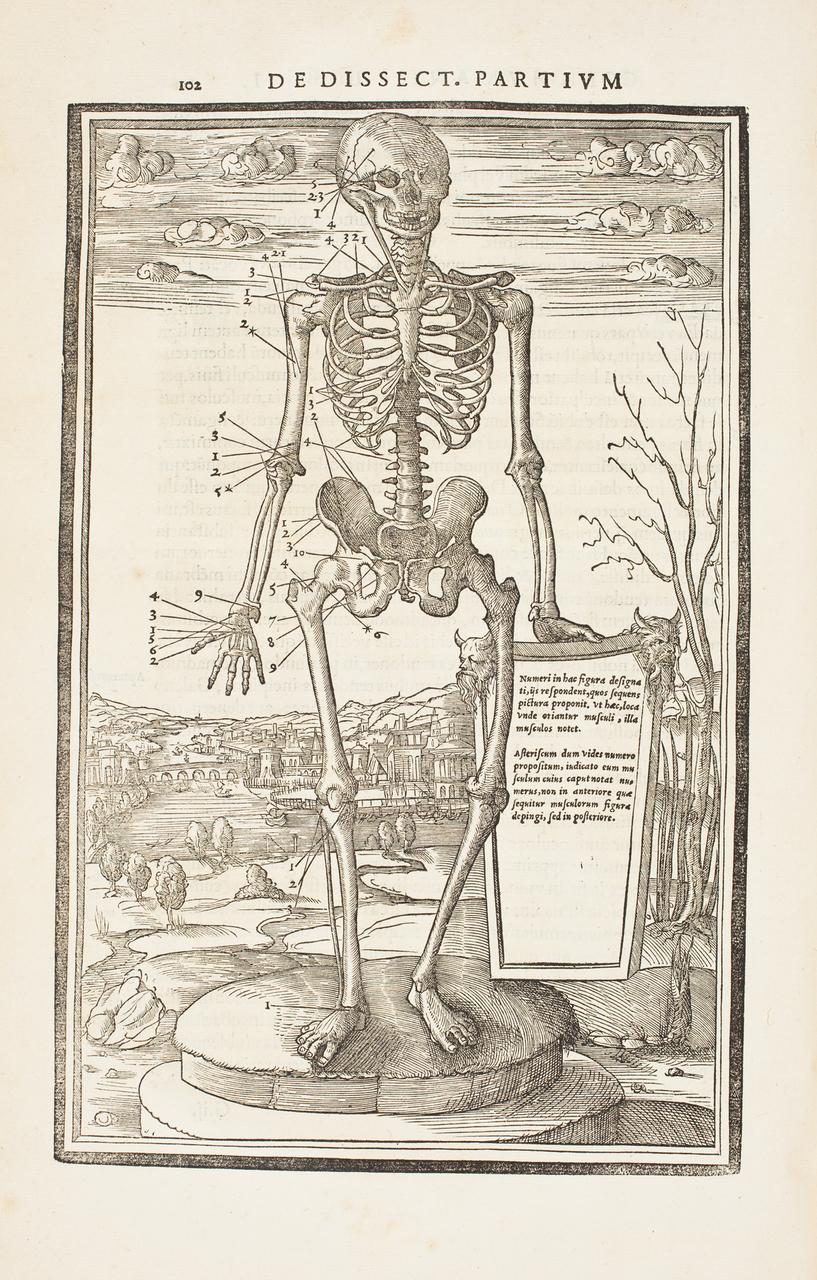 illustration-medicale-biologie-30