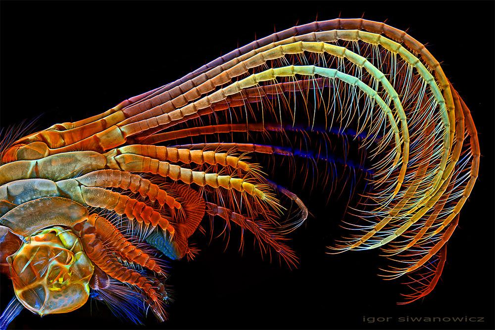 microscope-laser-animal-siwanowicz-02