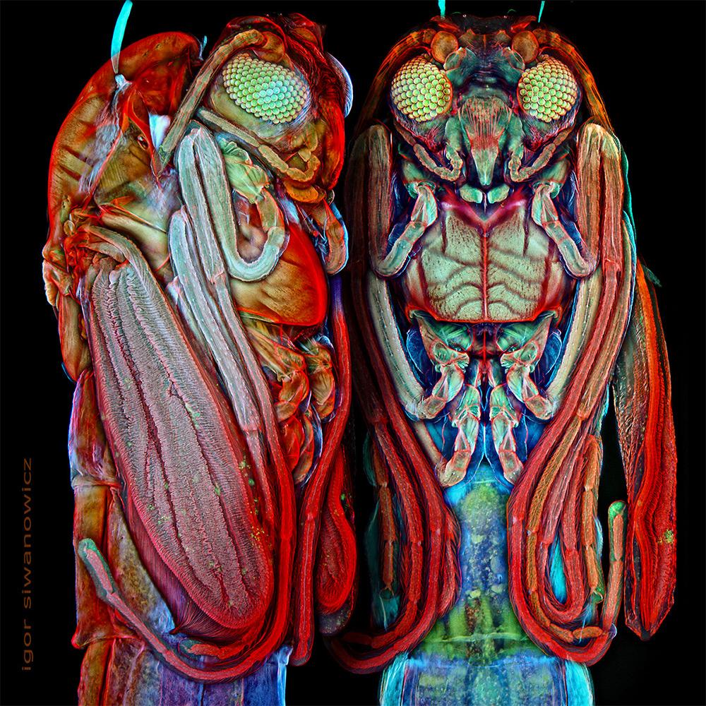 microscope-laser-animal-siwanowicz-03