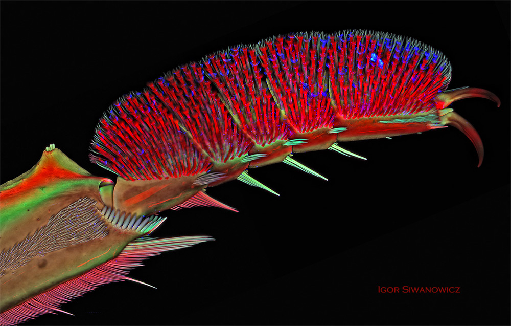 microscope-laser-animal-siwanowicz-06
