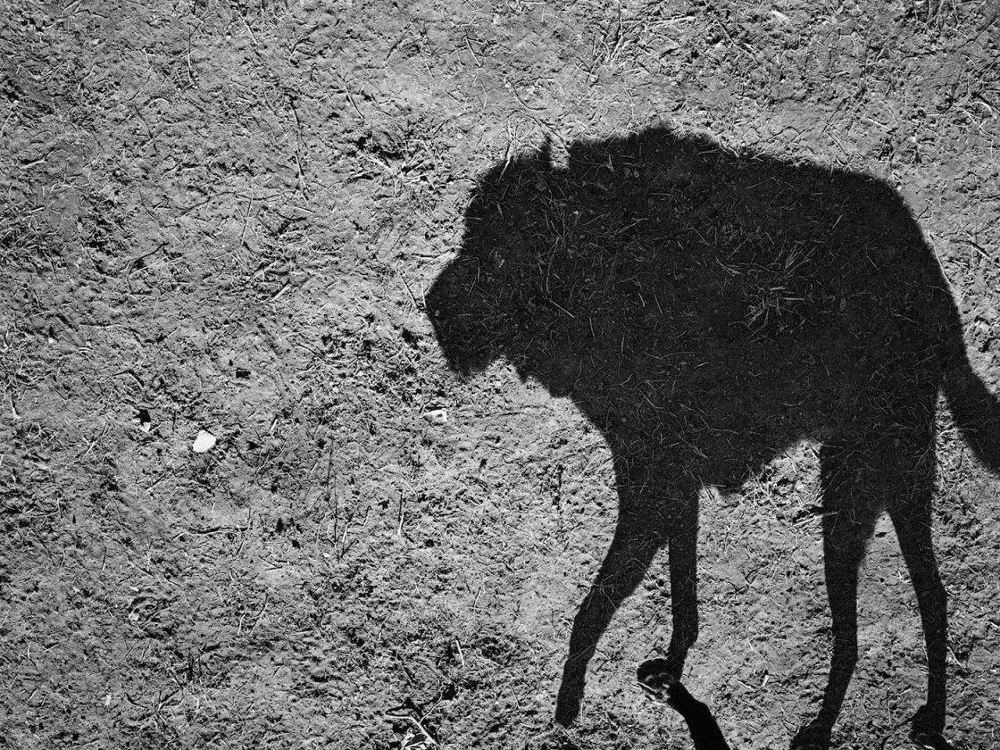 ombre-chien-thomas-roma-01