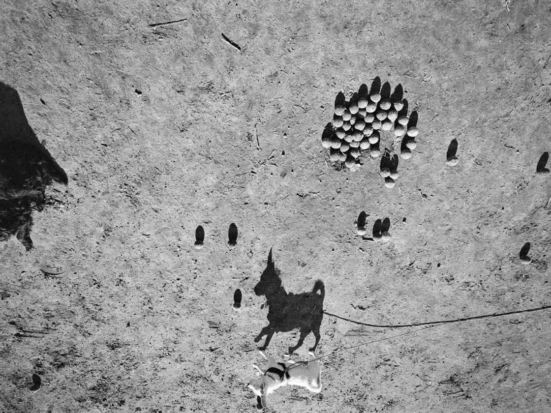 ombre-chien-thomas-roma-06